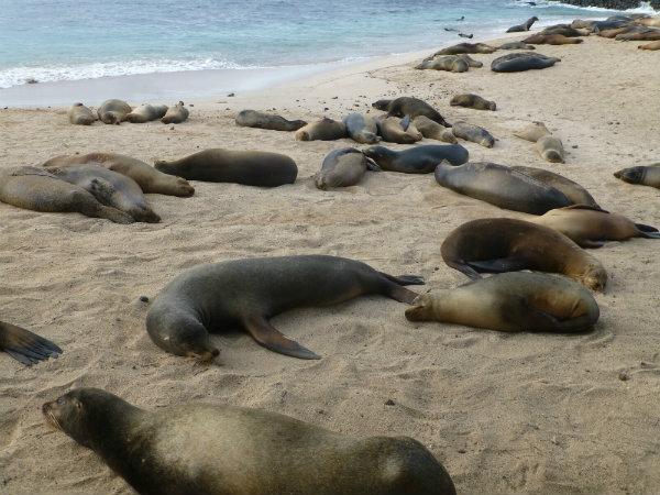 sea-lions-600