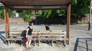 Chatting to a sea lion on a bench